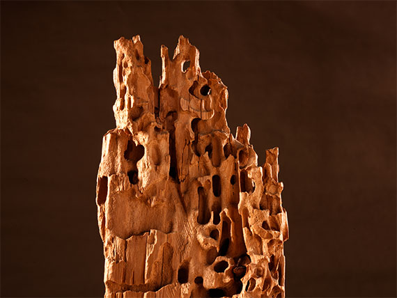 Holzzerstörung durch Ameisenbefall