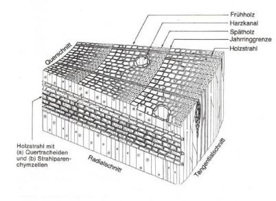 Softwood structure