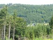 Forest Olsberg
