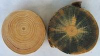 Geschütztes vs. ungeschütztes Holz,verblautes Rundholz